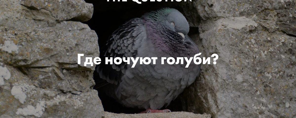 Воронеж переночевать